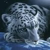Аватар для Pomochnik